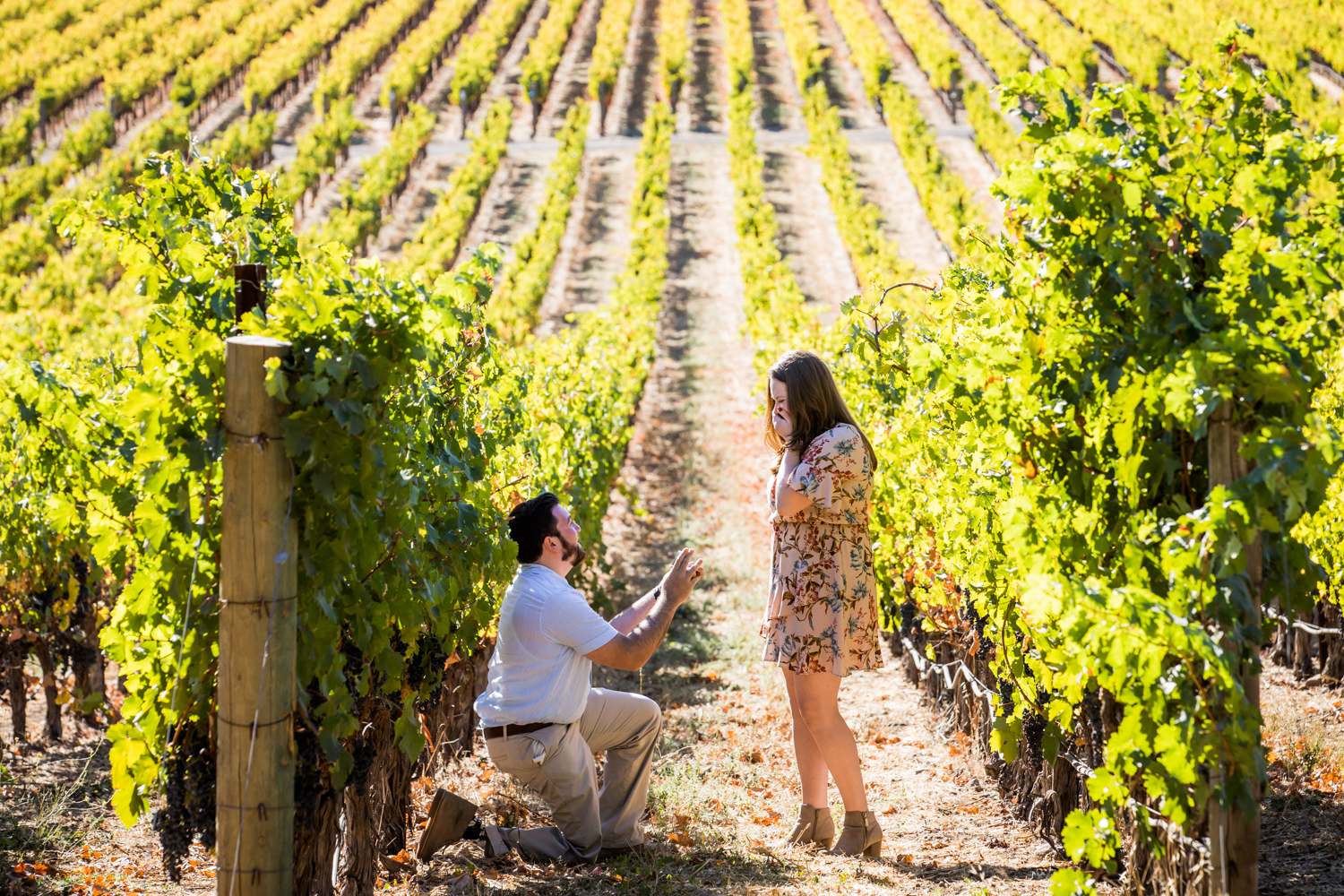 Best Proposal Wineries in the Napa Valley - Stags Leap Winery, Yountville - CA